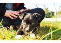 Adoptad cachorritos muy simpaticos